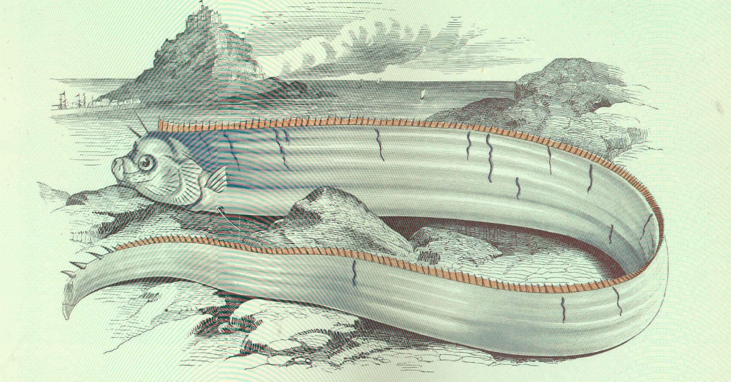 FMIB_46195_Banks's_Oarfish.jpeg
